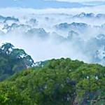 Природная роскошь Брунея. Улу-Тембуронг